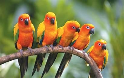 Birds Wallpapers Desktop Backgrounds Bird Parrot Exotic
