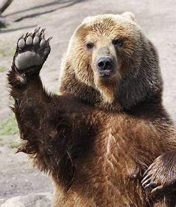 10 Interesting Bear Facts