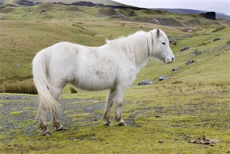 ponies native horses british isles types pets4homes