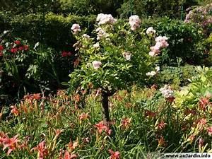 Parterre De Plante : comment associer les rosiers aux plantes vivaces ~ Melissatoandfro.com Idées de Décoration