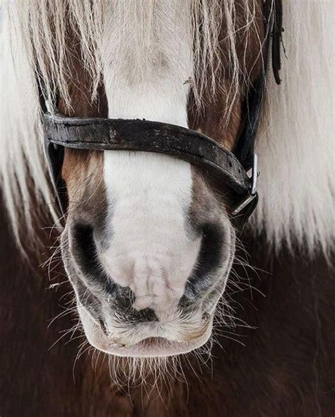 beginners draft horse horses fashionactivation