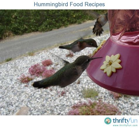 homemade hummingbird food recipes thriftyfun