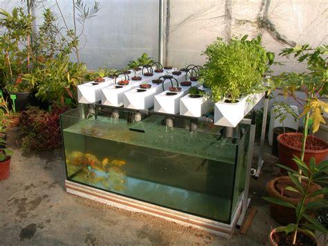 backyard aquaponics sharingame