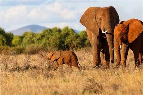 private kenya walking safari  worlds  memorable