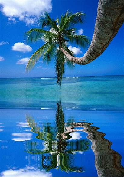 Palm Tree Water Moving Nature Google Trees