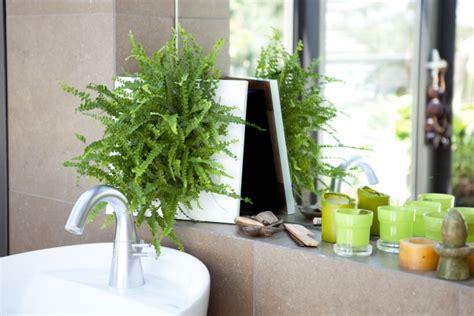 Zimmerpflanzen Nachhaltig Gut Für Raumklima, Gesund Und