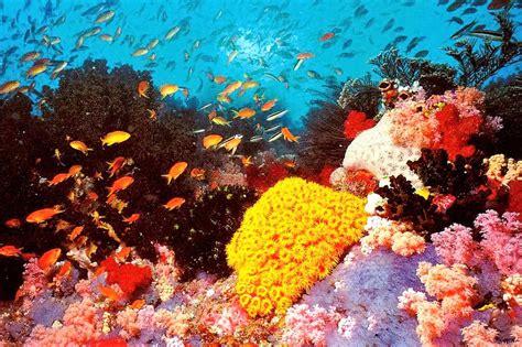 5-five-5: Great Barrier Reef (Australia)