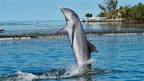 koreanisches delfinarium entlaesst delfine  die freiheit