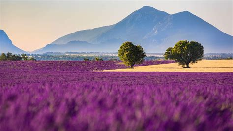 purple-farm-awesome-nature-wallpapers