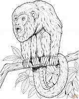 Tamarin Howler Supercoloring Ausmalbild Singe Affen Scimmie Coloriage Stampare Guenon Ausmalen Fresco Scimmia Branche Almanaque Utan Designlooter Animali 78kb 2134 sketch template