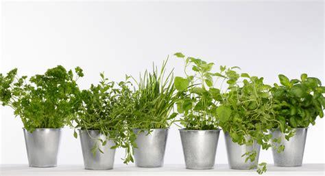 plante pour cuisine mon mini jardin de plantes aromatiques prima