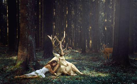 Reindeer Wallpaper Hd by Forest Reindeer Dress Raindeer