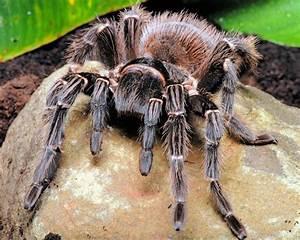 ***2013 Worlds Hardest Creature Competition- Round 1 ...