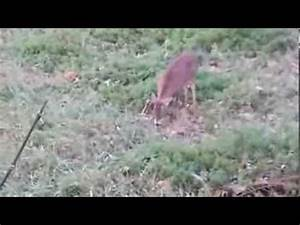 Ohio bow hunt - Public Land Bow Hunting during the rut ...
