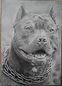 Drawing of a Pitbull by Valyanna8361 on DeviantArt