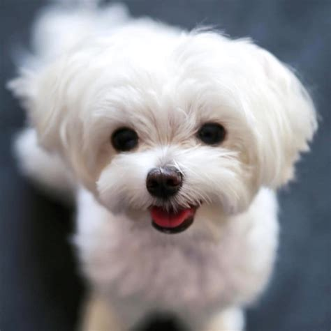 Of The Most Popular And Completely Adorable Dog Mi