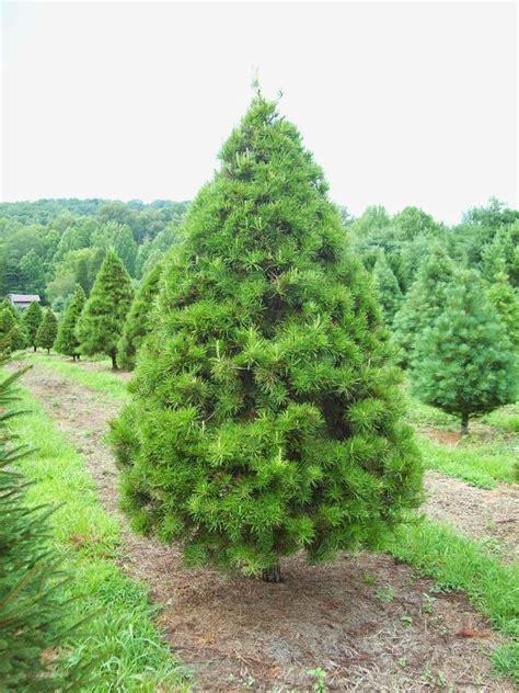 christmas tree name photozzle