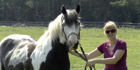 ears horses eyes talk each huffpost