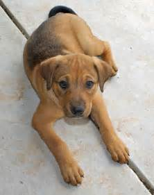 Puppies Mixed Breed Dogs