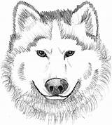 Wolf Coloring Realistic Printable Head Face Wolves Animal Dog Adult Drawing Lobo Colors Colouring Sheets Cara Theme Adults Colorir Paginas sketch template