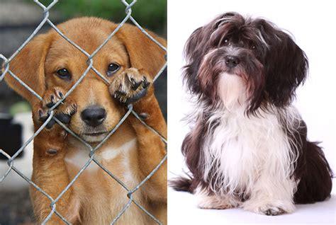 Tierschutz Kleine Hunde