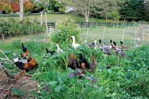 Preparing Your Vegetable Garden Winter