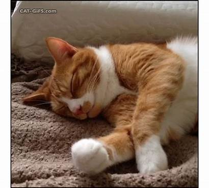 Ginger Cats Cat Funny Gifs Boop Sleepy