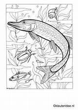 Coloring Adult Pond Kleurplaat Preschool Sloot Bridges Covered Kleuteridee Dieren Sea Fish Adults Dropbox Kleurplaten Silk Drawing Realistic sketch template