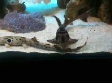 my home quot shark aquarium quot