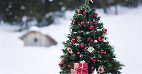 Weihnachtsbaum Lila Geschmückt by 10 Fakten Rund Um Den Christbaum Mein Sch 246 Ner Garten