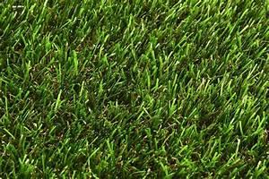 Engrais Gazon Naturel : gazon avec engrais ~ Premium-room.com Idées de Décoration