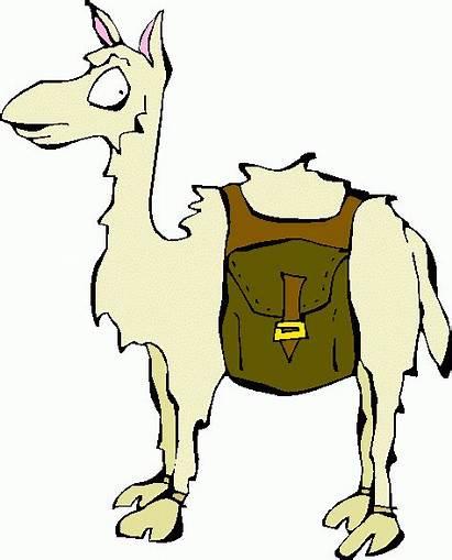 Llama Clipart Alpaca Clip Cartoon Llamas Clipartbest