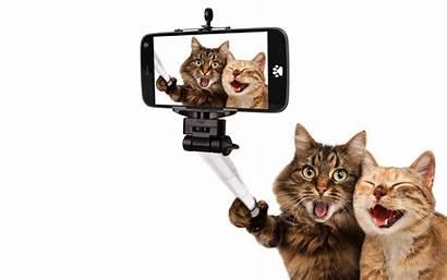 Cat Funny Backgrounds Nu