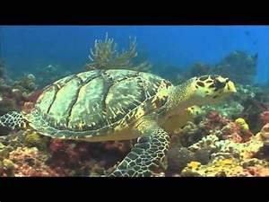 The Aquatic Biome - YouTube  Aquatic
