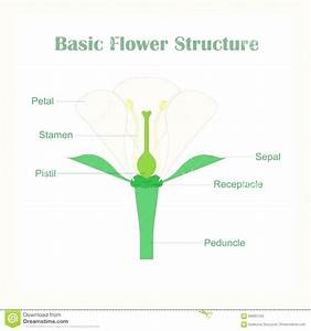 Diagram  Flower Parts Diagram Without Labels