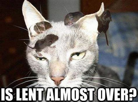 Lent Memes - lent 2015 all the memes you need to see