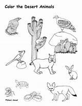 Desert Coloring Animals Pages Animal Printable Habitat Plants Habitats Landscape Biome Nature Cactus Books Colouring Sheets Worksheet Drawing Diorama Deserts sketch template