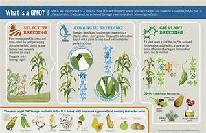 What Are The Causes And Effects Of Gmos