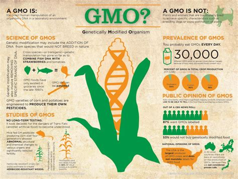 Modification Genetic Organisms by Gmo Genetically Modified Organism Visual Ly