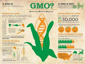 Gmo  Genetically Modified Organism