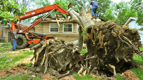 How Much Does Tree Removal Cost?   Angie's List