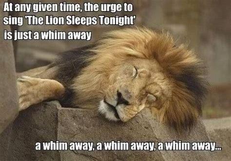 Hilarious Memes Tumblr - funny animal memes tumblr