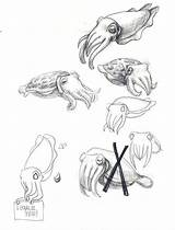 Cuttlefish Drawing Flamboyant Sketches Coloring Sketch Drawings Sea Sketchite Dessin Visiter Fish Animaux Chok sketch template