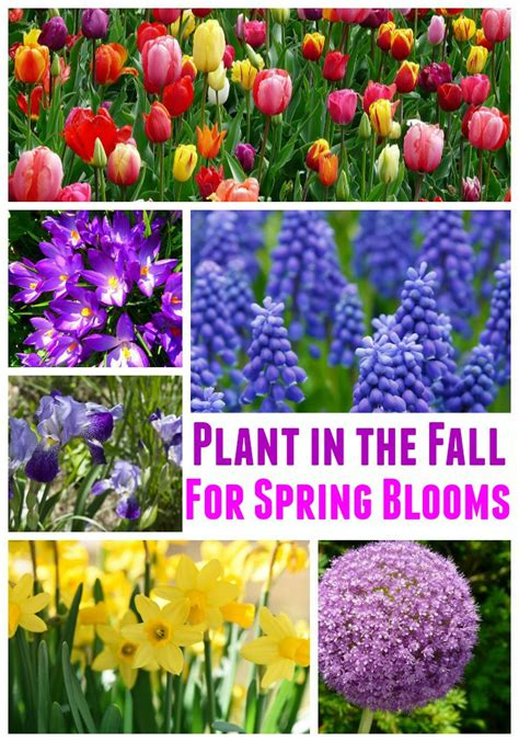 best fall bulbs for blooms