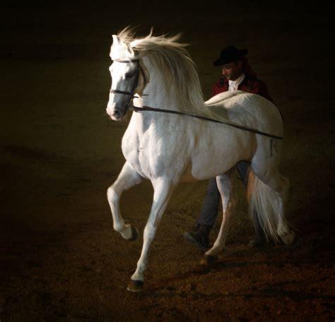 caballos caballo horse pura raza horses andalusian mejores pre espanoles espanola andaluces sangre andaluz imagenes spanish espanola razas pale andalusia