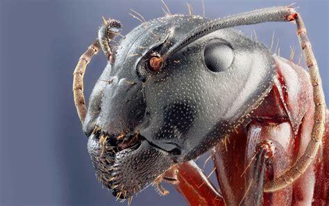 cockroach head hd animals  birds wallpapers