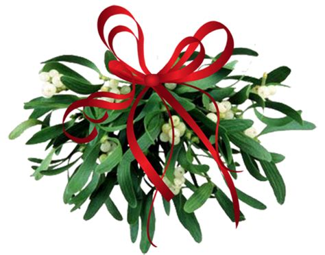 where to find mistletoe bob vila