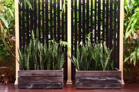 les plantes d ombre cherchent leurs places