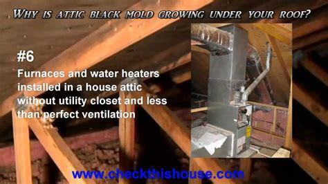 black mold  attic    attic mold growing