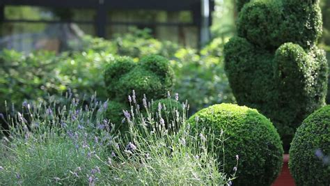 Topiary Definitionmeaning